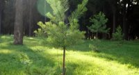 Наш лес. Посади своё дерево